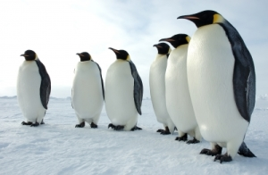 GOOGLE PENGUIN NEWS